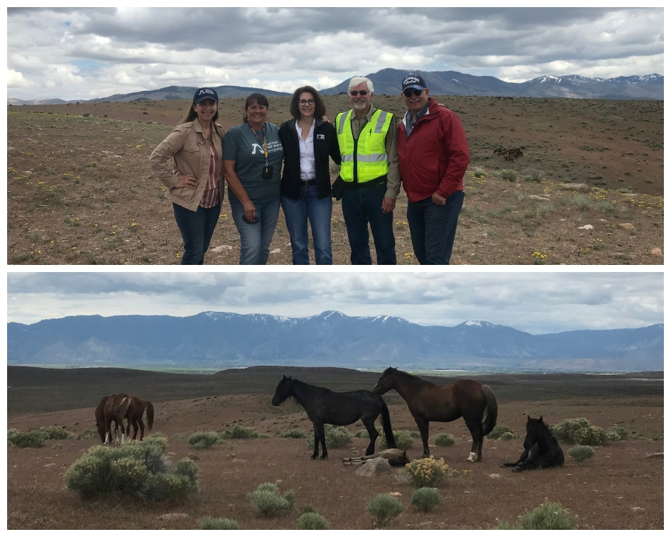 CCM meets with Wild Horse Advocates